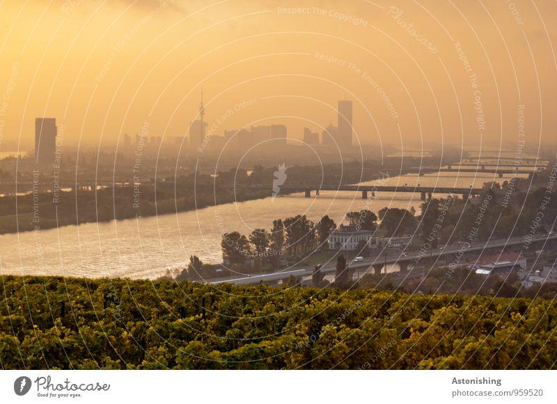 Morgen über Wien 2 Himmel Natur Stadt Pflanze Baum Landschaft Wolken Haus schwarz Umwelt Herbst Gebäude hell Luft Wetter orange