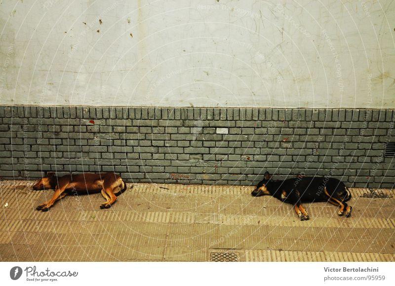 streets dogs Tier Hund Frieden Säugetier