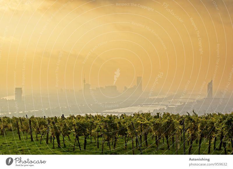 Morgen über Wien 1 Umwelt Natur Landschaft Pflanze Luft Himmel Horizont Sonnenaufgang Sonnenuntergang Sonnenlicht Herbst Wetter Schönes Wetter Sträucher Wiese