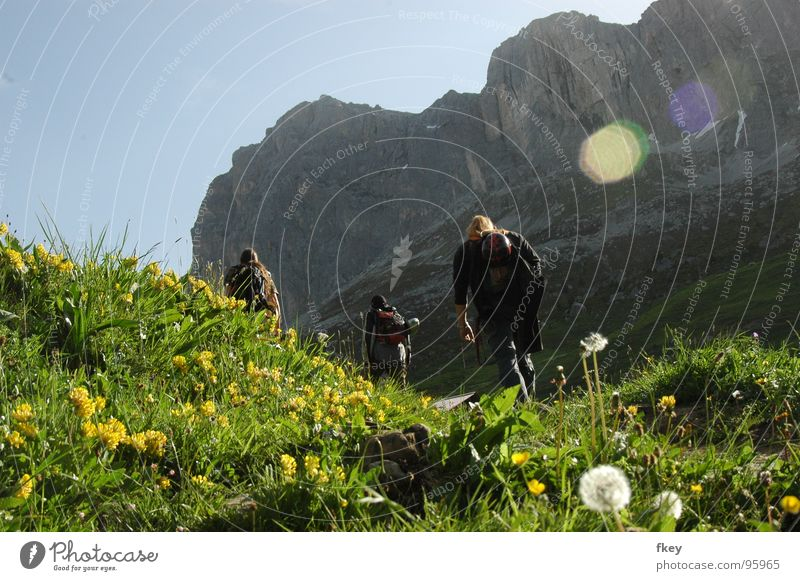 auf dem Weg nach oben Himmel Mann blau grün Ferien & Urlaub & Reisen Pflanze Sonne Sommer Blume Freude Ferne gelb Landschaft Leben Wiese Spielen