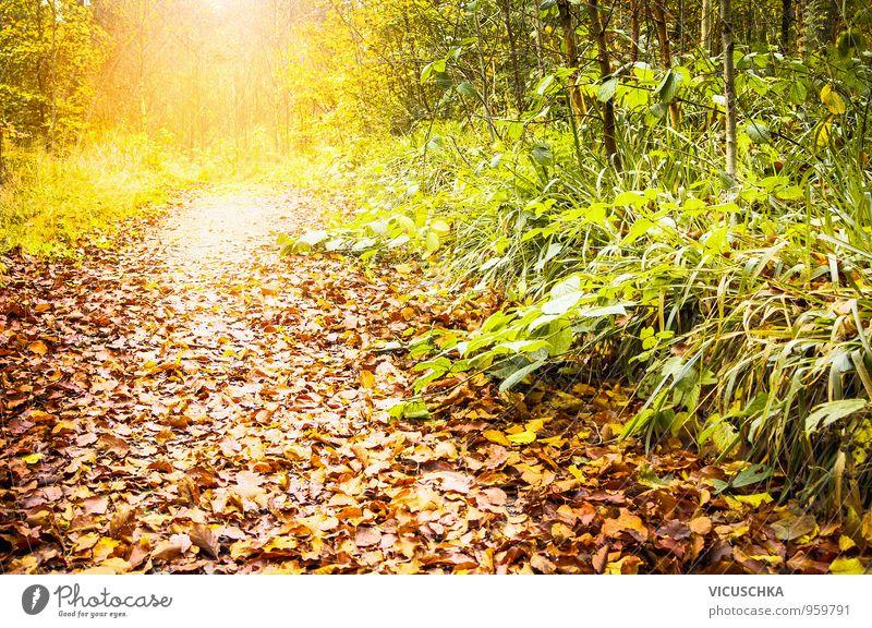 Fußweg im sonnigen Wald , Herbstlandschaft Natur Sonne Blatt gelb Wege & Pfade Hintergrundbild Park Design Schönes Wetter Harz