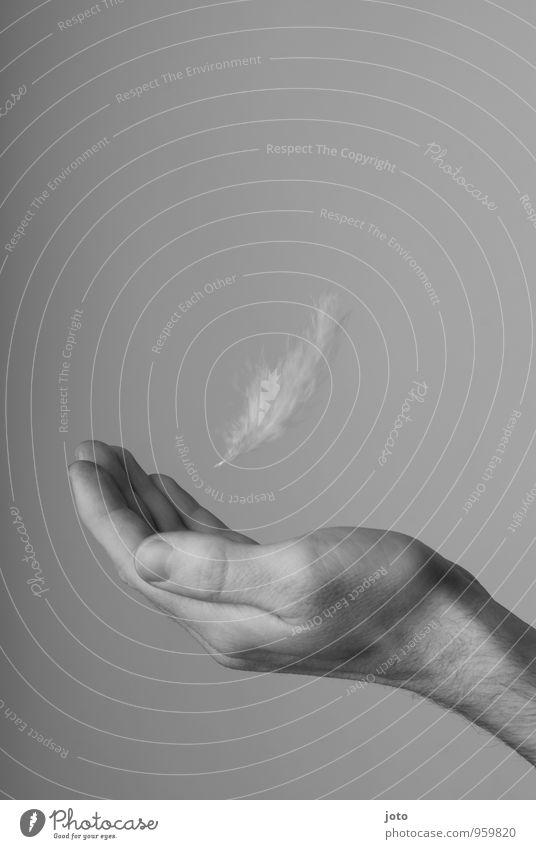 sanft landen Wellness harmonisch Wohlgefühl Zufriedenheit Erholung ruhig Meditation Trauerfeier Beerdigung Mann Erwachsene Hand fangen fliegen Kraft Schutz