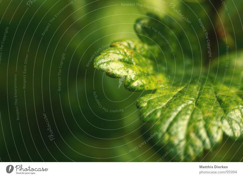 THAT'S GREEN Baum Zacken Pflanze grün Gefäße Hintergrundbild Sommer Urwald Urzeit Luft atmen Atem Holz Blume dunkel Erde Sand Falte Garten Blattgrün Ast