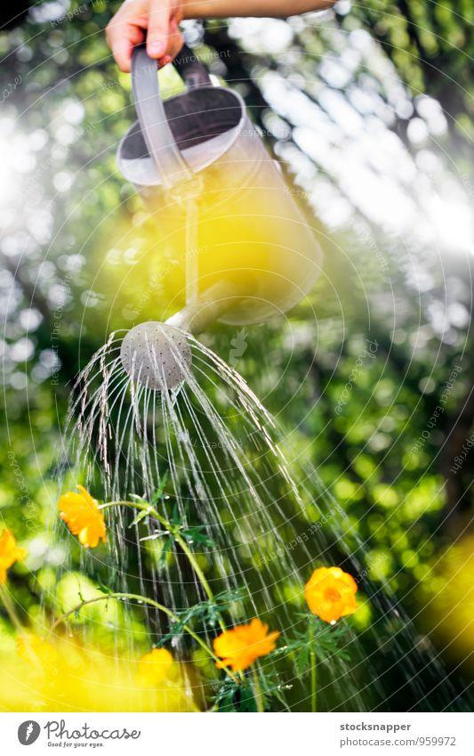 Bewässerung Gießkanne Blume Wasser Garten Gartenarbeit Hand Sommer Blumenbeet Objektfotografie Freizeit & Hobby Tag Außenaufnahme Schnauze Container
