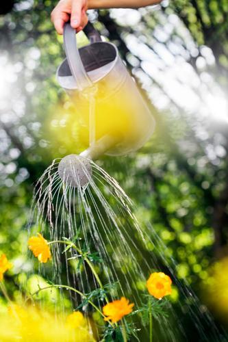 Wasser Sommer Hand Blume Garten Freizeit & Hobby Container Gartenarbeit Schnauze Objektfotografie Gießkanne Blumenbeet