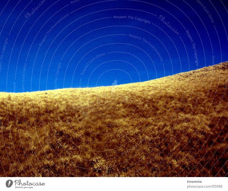 Dürre in Blau Himmel blau gelb Wiese Gras braun Horizont Sträucher Wüste dünn Hügel trocken Schönes Wetter Australien Steppe vertrocknet