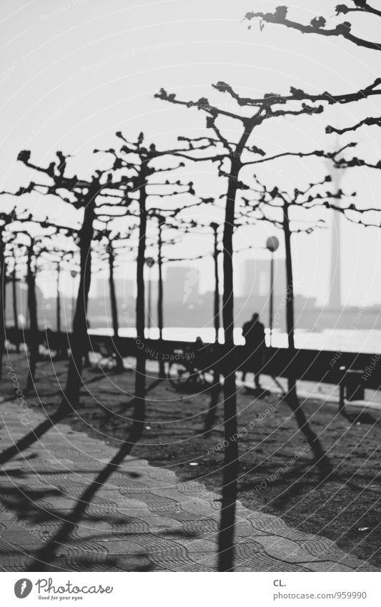 köbes, donn mech doch emol e lecker alt Freizeit & Hobby Städtereise Mensch Leben Umwelt Natur Himmel Herbst Schönes Wetter Baum Fluss Rhein Düsseldorf Stadt