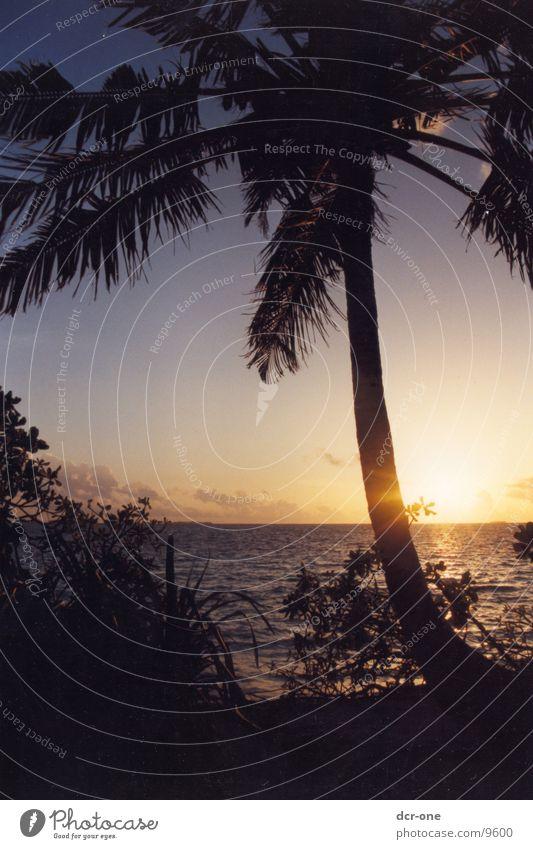 das paradies Sonne Meer Palme Malediven
