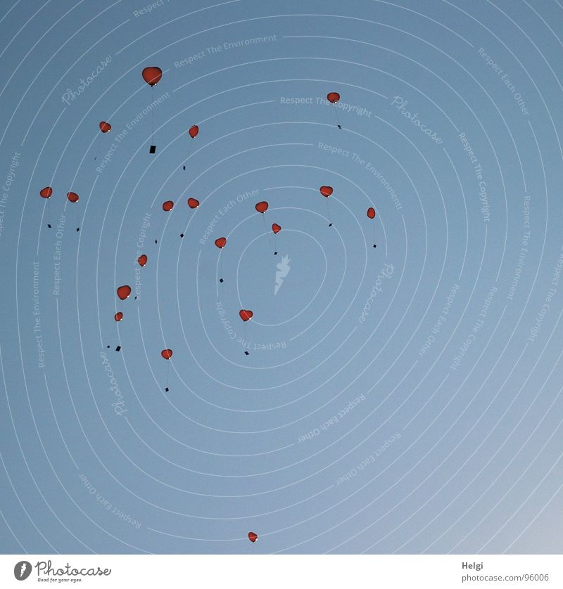 viele rote Herzluftballons fliegen am blauen Himmel empor Luftballon leicht Leichtigkeit Wunsch Glückwünsche Helium Gefühle Freude Vergänglichkeit Liebe