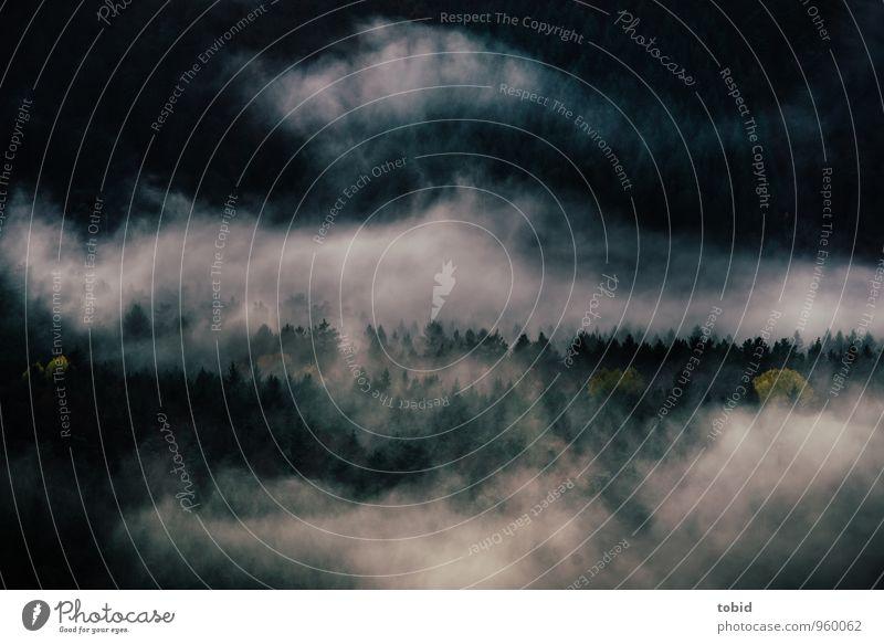 Schwarz-Wald Pt.2 Natur Landschaft Wolken Wetter schlechtes Wetter Baum Tanne Hügel bedrohlich dunkel Einsamkeit Endzeitstimmung Surrealismus mystisch