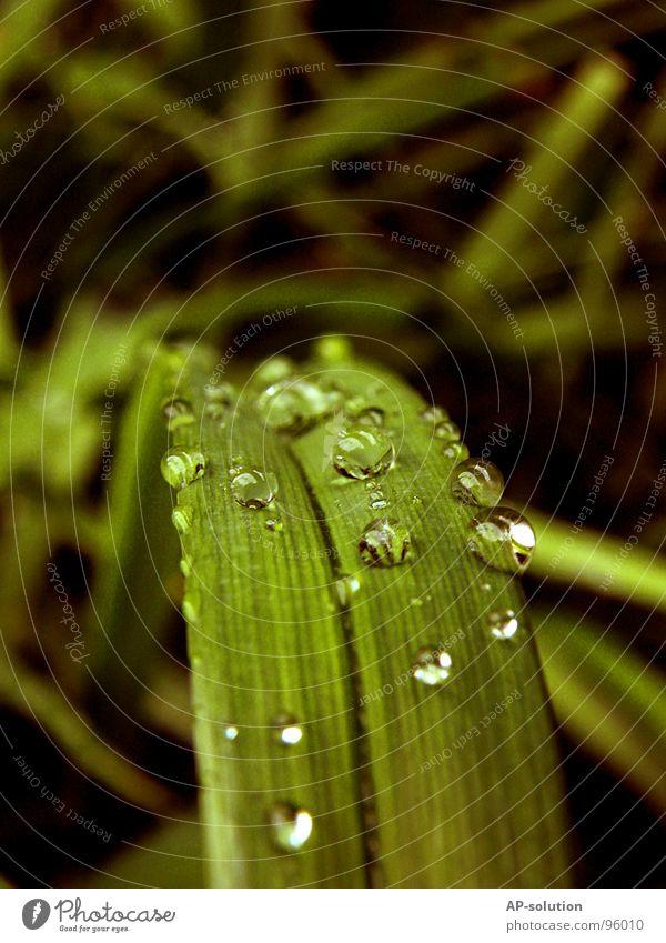 Tropfen *2 Regen Makroaufnahme frisch nass feucht Reflexion & Spiegelung grün grasgrün rund glänzend Wasser ruhig leicht perfekt Konzentration Nahaufnahme