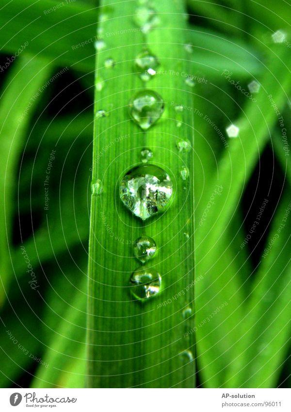 Tropfen *3 Regen Makroaufnahme frisch nass feucht Reflexion & Spiegelung grün grasgrün rund glänzend Wasser ruhig leicht perfekt Konzentration Nahaufnahme