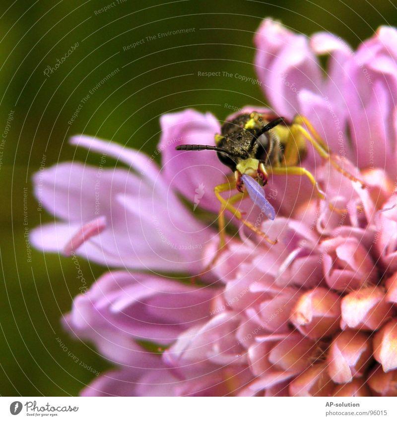 Blütenfresser-Irgendwas Natur blau Blume Tier schwarz gelb Gefühle klein Arbeit & Erwerbstätigkeit fliegen Flügel violett Blühend Insekt grinsen