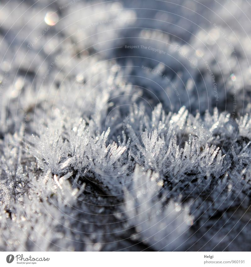 Naturkunstwerk... Umwelt Winter Eis Frost frieren glänzend ästhetisch authentisch außergewöhnlich schön einzigartig kalt klein natürlich Spitze grau weiß bizarr