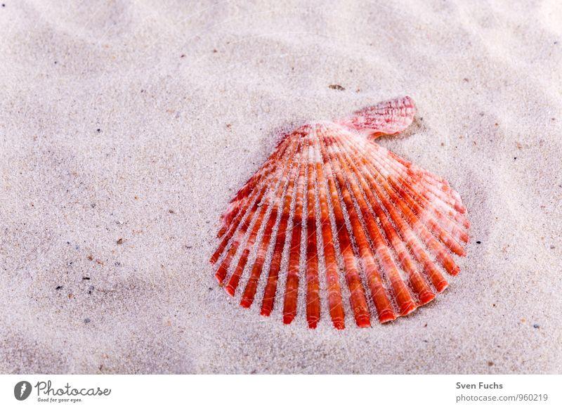Muschel Natur Meer Strand Sand Symbole & Metaphern Wellness maritim