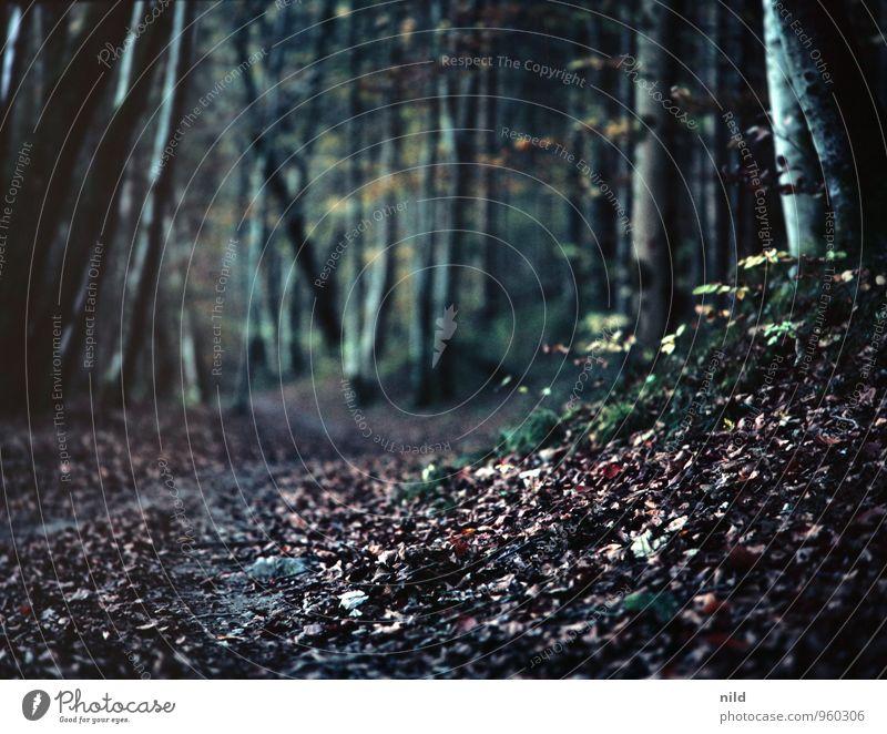 im dunklen Herbstwald Joggen Umwelt Natur Landschaft Pflanze Baum Wald Wege & Pfade Erholung dunkel blau schwarz Romantik Blatt wandern Farbfoto Außenaufnahme