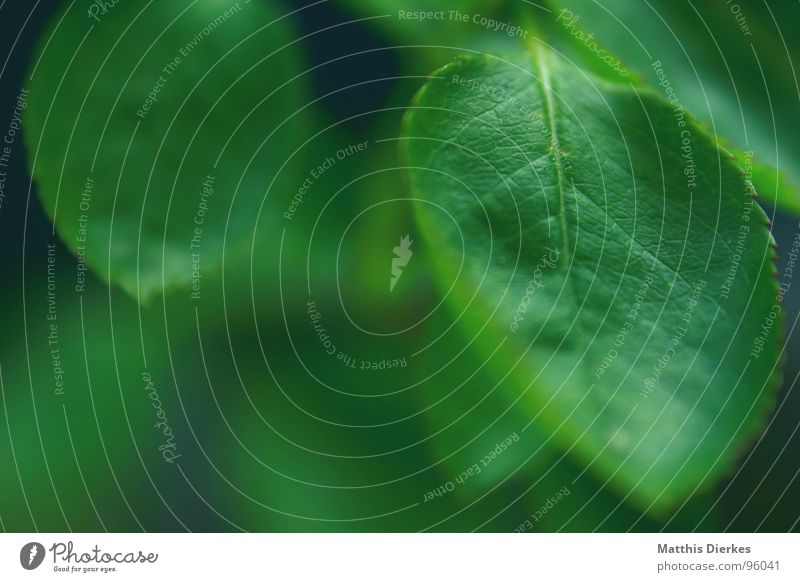 GREEN-COLOURED Baum Zacken Pflanze grün Gefäße Hintergrundbild Sommer Urwald Urzeit Luft atmen Atem Holz Blume dunkel 2 tiefgründig Ecke Schweben Erde Sand