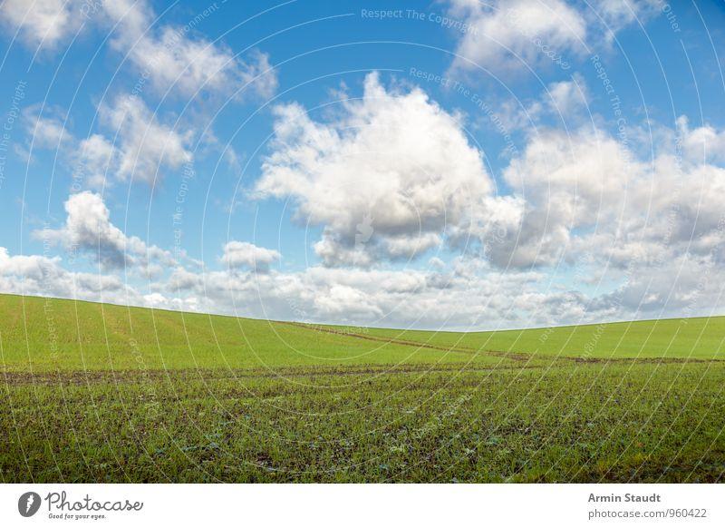 Schlichtes Feld Umwelt Natur Landschaft Himmel Wolken Frühling Schönes Wetter Nutzpflanze Hügel Wachstum authentisch Ferne Unendlichkeit natürlich positiv blau