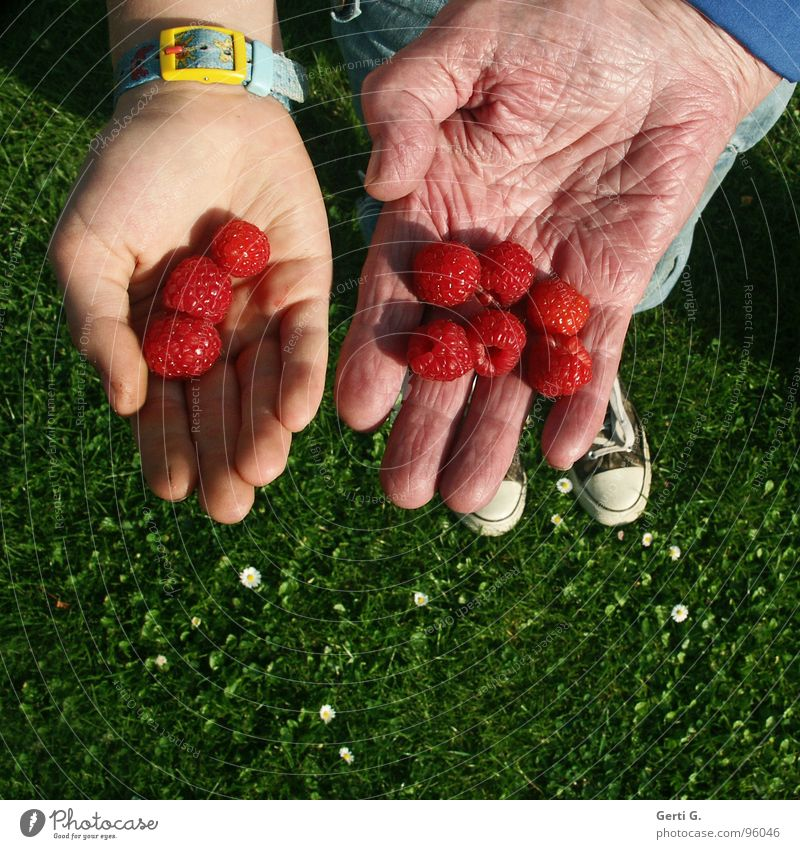 11 + 86 Mensch Jugendliche Hand grün rot Wiese Senior Gras 2 Schuhe Frucht Haut 3 Finger rund Vergänglichkeit