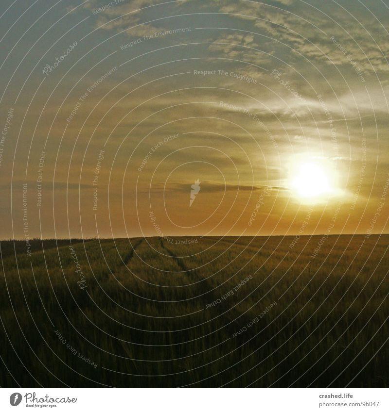 Sundown II Feld Sonnenuntergang Gelbstich gelb grün Gras Ferne Weizen Unendlichkeit Licht Sonnenaufgang Abend Morgen Sonnenstrahlen Sommer Physik Straße Himmel