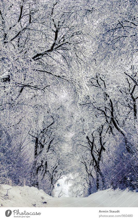 Winter - Schnee - Bäume - Weg ruhig Winterurlaub Natur Klima Wetter Schönes Wetter Baum Sträucher Wald frieren ästhetisch frisch kalt schön weiß Stimmung Schutz
