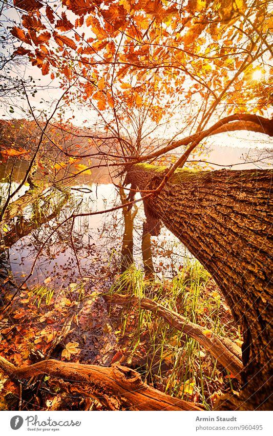 Baum - Umgefallen - Herbst ruhig Ferien & Urlaub & Reisen Natur Landschaft Wasser Himmel Sonne Sonnenlicht Wald Seeufer ästhetisch schön gelb orange Stimmung