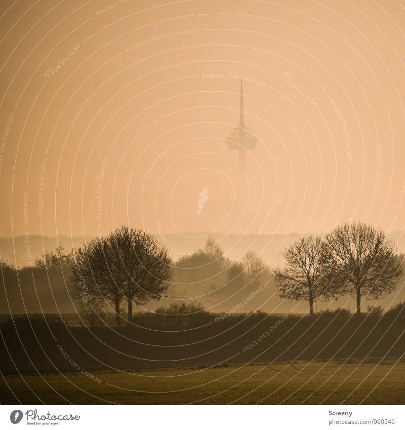 Im Nebel Umwelt Landschaft Herbst Baum Park Wiese Feld Köln Stadt Stadtrand Wahrzeichen Colonius - Fernsehturm hoch Spitze Farbfoto Außenaufnahme Menschenleer