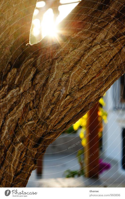 Sonnenblitz Natur Sommer Schönes Wetter Baum Baumrinde Ast Astgabel Holz ästhetisch exotisch Fröhlichkeit glänzend hell Gefühle Stimmung Glück Zufriedenheit
