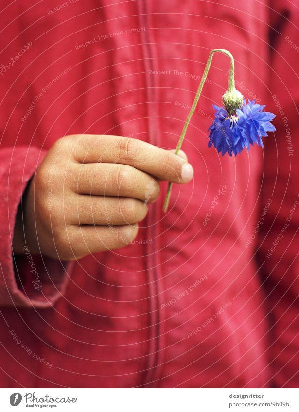 kaputt Kind Hand Mädchen Blume blau rot Jacke Berghang Kornblume