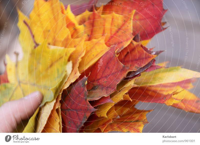 Eine Handvoll Herbst Lifestyle Freude Gesundheit Wohlgefühl Umwelt Natur Tier Baum Blatt Garten Wald Blumenstrauß Wandel & Veränderung Herbstlaub herbstlich