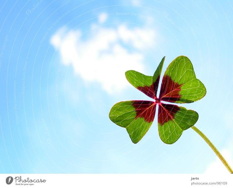 schönes Wetter Freude Glück Zufriedenheit Himmel Wolken blau grün Vertrauen Hoffnung Volksglaube Wunsch Glücksklee Klee Glückwünsche vierblättrig Farbfoto