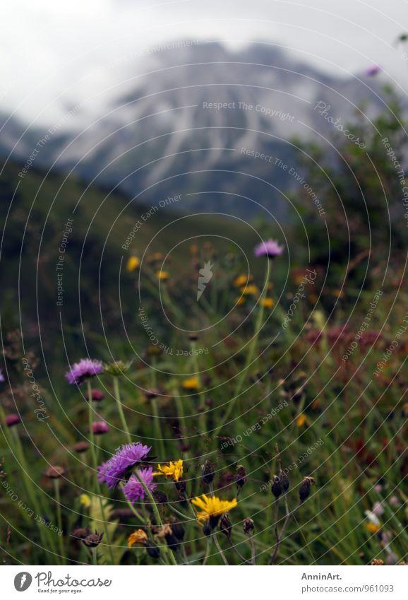 Bergblumen Natur Ferien & Urlaub & Reisen Pflanze Erholung Landschaft ruhig Wolken Ferne Umwelt Berge u. Gebirge Wiese Gras Gesundheit Freiheit Felsen Wachstum