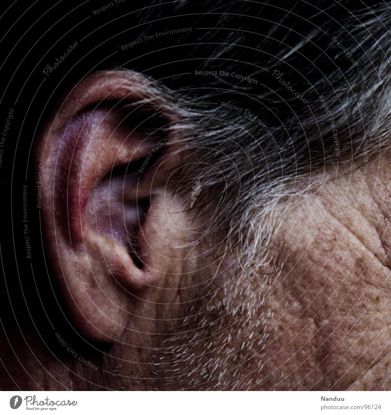 rotes Ohr Haare & Frisuren Haut Sinnesorgane Mensch Mann Erwachsene Senior grauhaarig hören nah ergraut Äderchen Gefäße verwundbar sensibel Lachfalte
