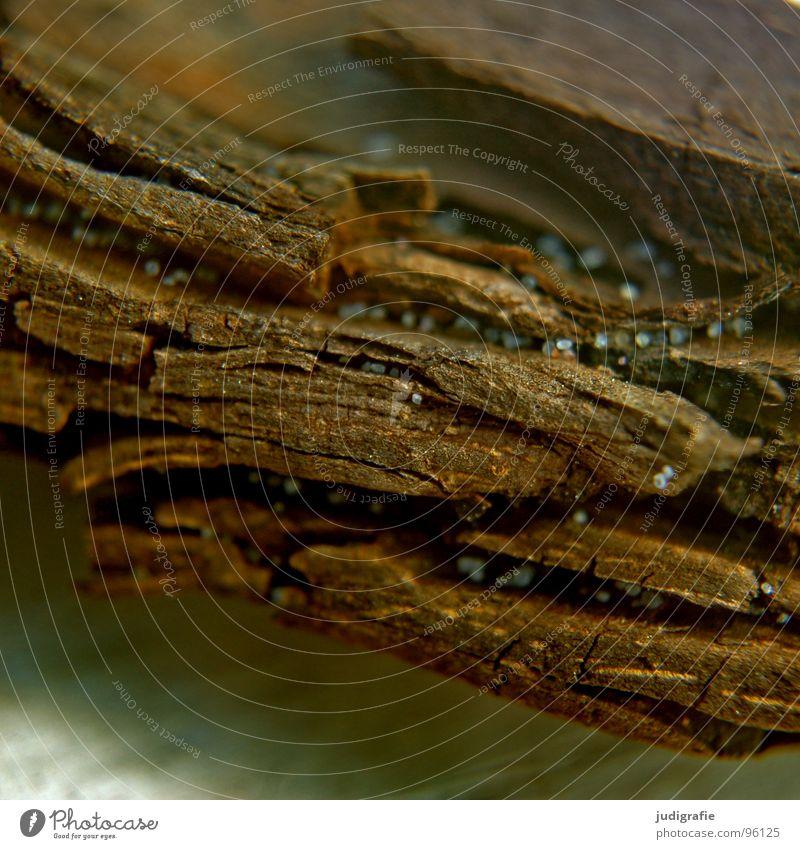Holz und Sand Sandkorn Treibholz Riss rau braun Vergänglichkeit Strand Küste alt Strukturen & Formen verfallen Tod