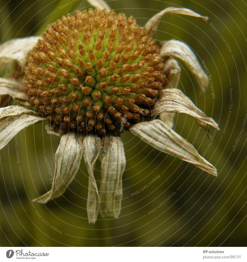 Vergänglichkeit Natur alt grün schön Pflanze Sommer Blume gelb Tod Wiese Gras Frühling Garten Blüte Traurigkeit orange
