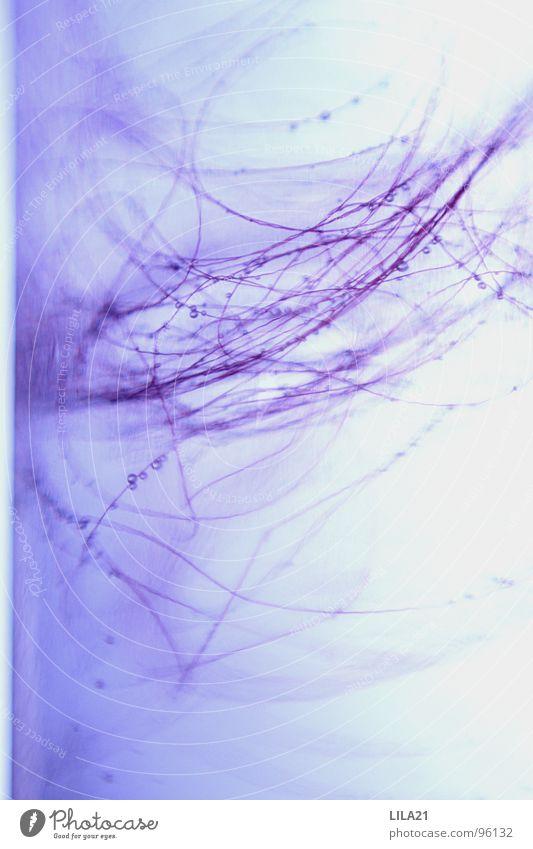 Lilac Wasser weiß rot ruhig schwarz Erholung dunkel Spielen Haare & Frisuren Linie rosa Hintergrundbild Wassertropfen violett zart Teile u. Stücke