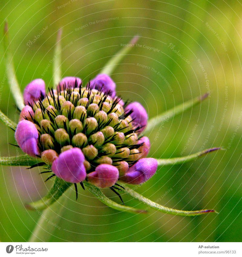 lila Blümchen Blühend Pflanze Blume Blüte Wachstum Makroaufnahme bestäuben Frühling Sommer violett grün Blumenstrauß Biene Frühlingsgefühle schön zart Botanik
