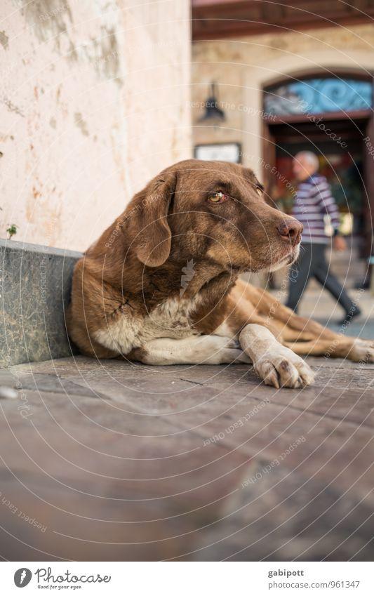 Hundeleben Reichtum Antalya Altstadt Tier Haustier 1 liegen Traurigkeit Sorge Müdigkeit Appetit & Hunger Heimweh Einsamkeit Erschöpfung obdachlos Straße
