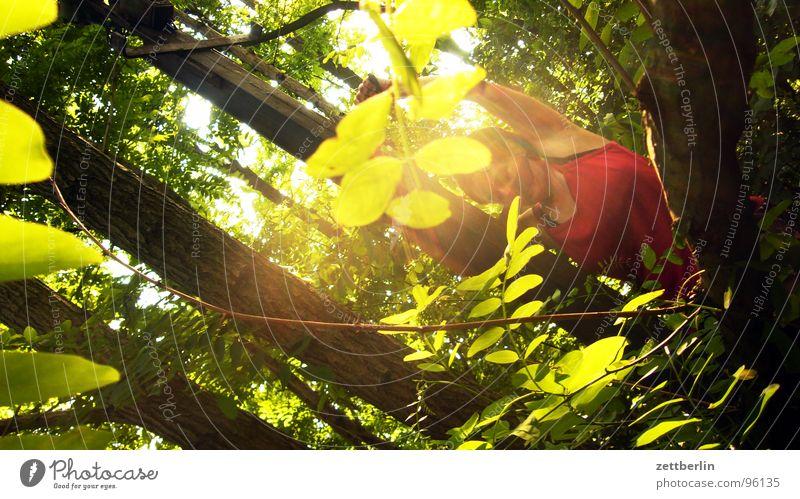 Kletterrose {f} = rambler rose Baum Baumstamm Blatt Blätterdach Gegenlicht Wald gefährlich Frau rot Sommer Ferien & Urlaub & Reisen Sonne Kontrast geheinmis
