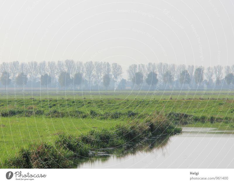 Restnebel am Fluss... Umwelt Natur Landschaft Pflanze Wasser Himmel Herbst Nebel Baum Gras Grünpflanze Wildpflanze Flussufer stehen Wachstum authentisch