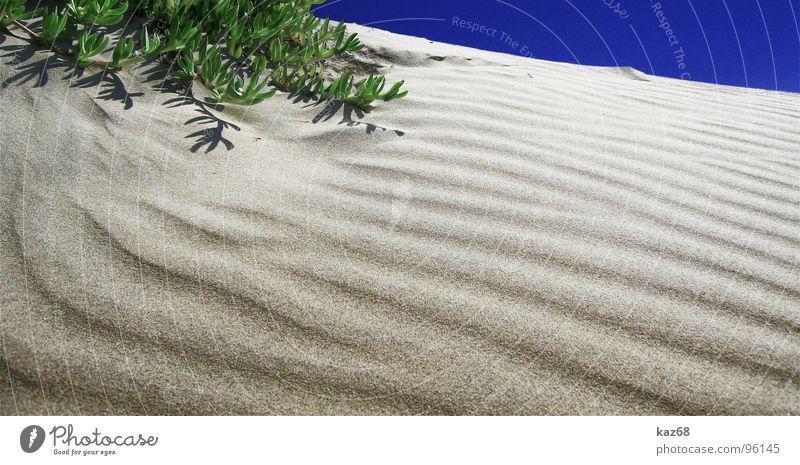 Die Wüste lebt grün blau Pflanze Sommer Strand Ferien & Urlaub & Reisen ruhig Einsamkeit gelb Leben oben Wärme Sand Linie braun Hintergrundbild