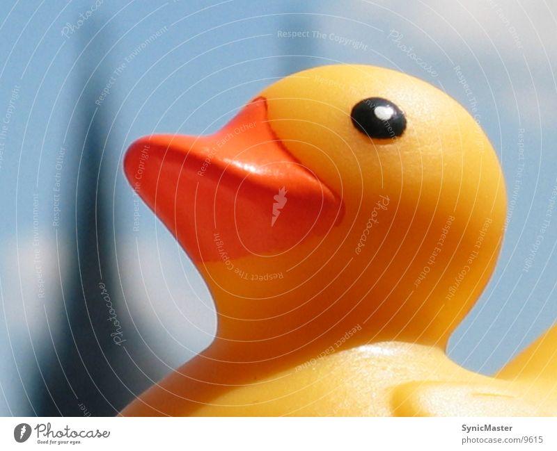 Ente Am Fenster Sonne Sommer gelb Fenster Dinge Ente