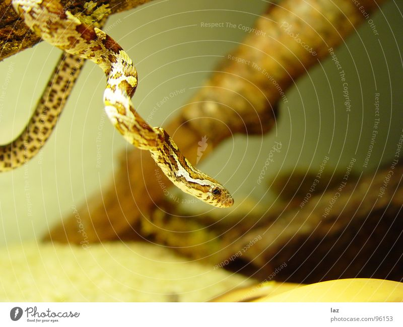 In der Schlange grün Windung grün-gelb weiß gestellt Terrarium lau braun beige khakigrün Zoo Tiergarten biegen geschmeidig Muster Lichtpunkt Fliesen u. Kacheln