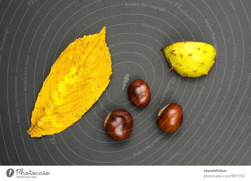 Stillleben der Kastanien Natur Pflanze Herbst Baum Blatt frisch natürlich braun mehrfarbig gelb Hintergrund Kastanienbaum fallen Ernte Hülse Nut Muttern roh