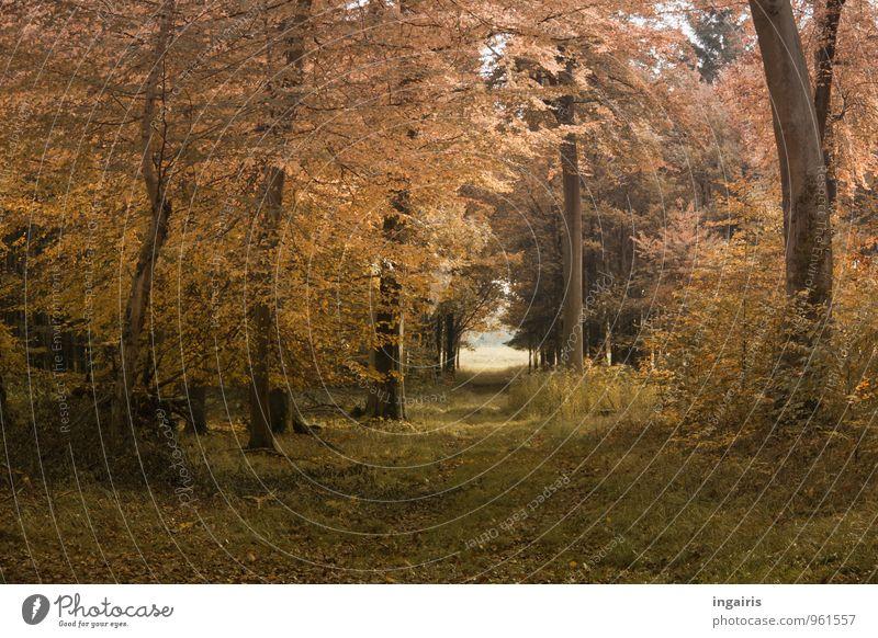 Novemberwärme Ausflug Umwelt Natur Landschaft Pflanze Sonnenlicht Herbst Klimawandel Schönes Wetter Baum Gras Sträucher Blatt Wald Erholung leuchten dehydrieren