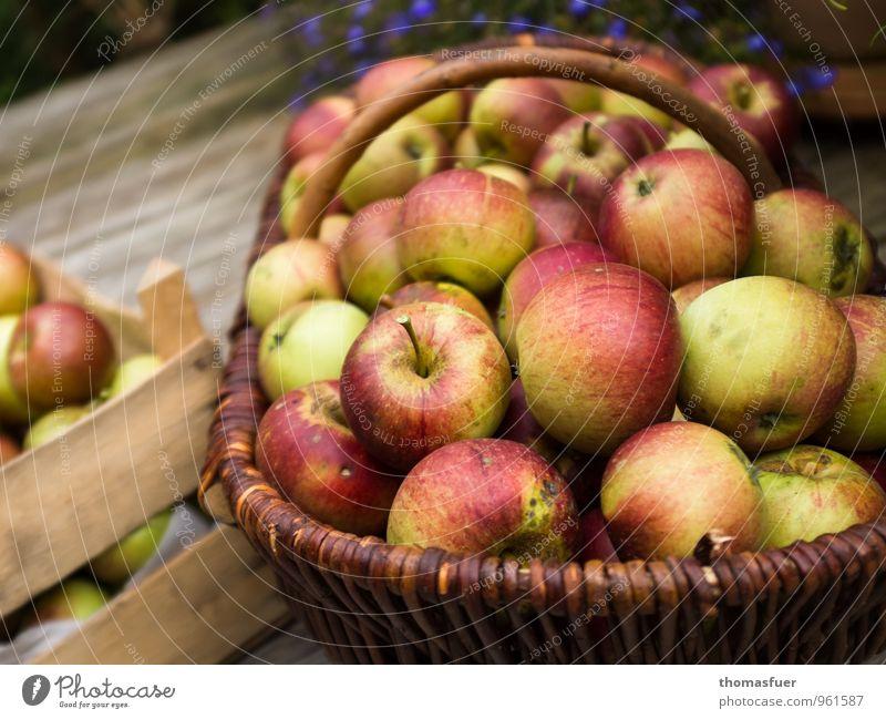 Apfelernte Frucht Bioprodukte Vegetarische Ernährung Gesundheit Herbst Garten Terrasse Holz ruhig Pause Korb Kiste Ernte saftig reif ökologisch Farbfoto