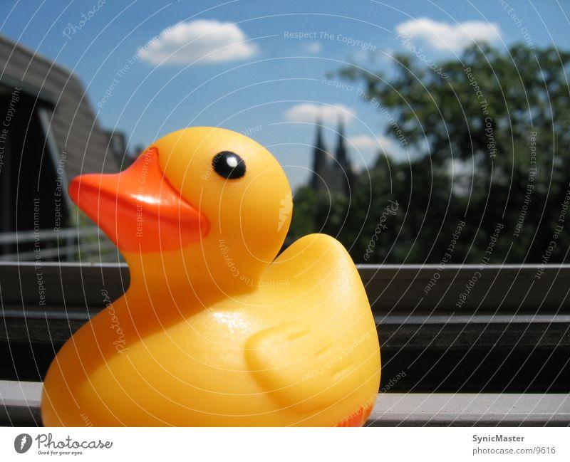 Ente am Fenster Sommer gelb Dinge Sonne