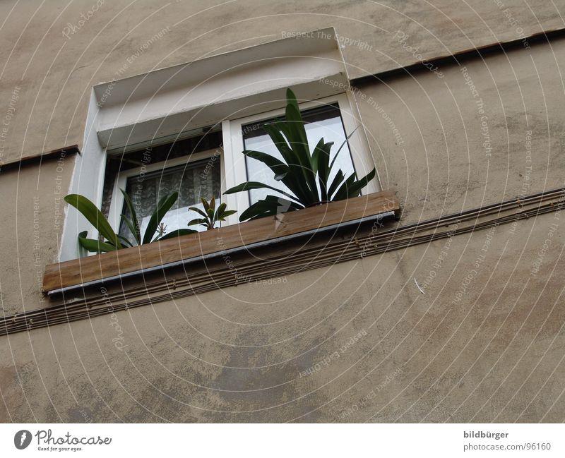Fenster auf Kippe Blume Haus Fenster grau Mauer Beton trist Gesetze und Verordnungen Blumenkasten Mietrecht