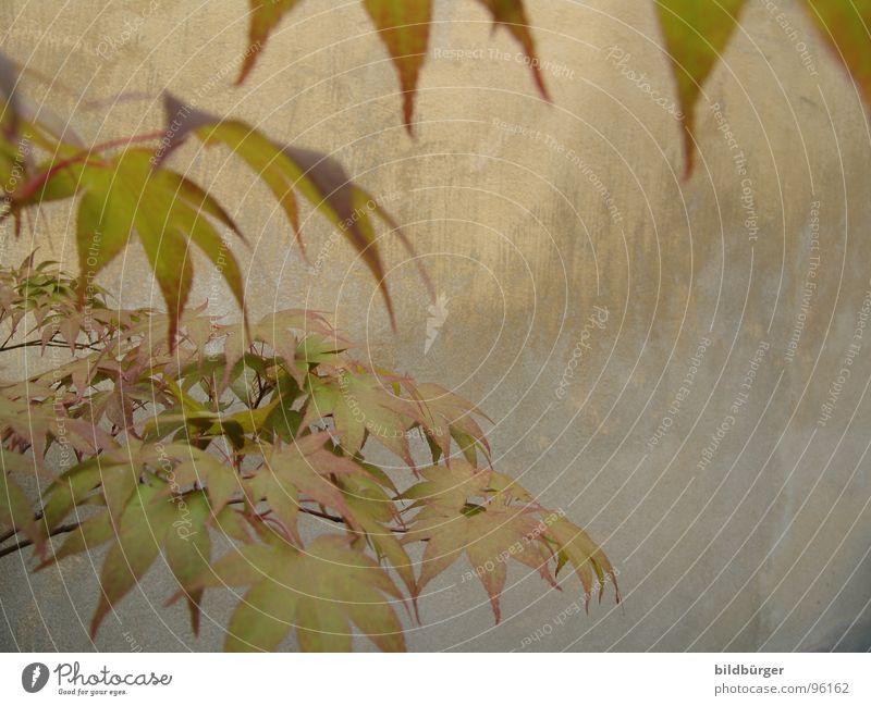 Da bist Du Blatt Baum grün Pflanze Wand grau Beton Ast Jahreszeiten Betonwand