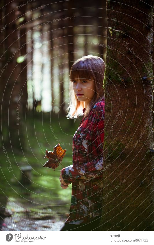 Herbst feminin Junge Frau Jugendliche 1 Mensch 18-30 Jahre Erwachsene Blatt Wald schön Farbfoto Außenaufnahme Tag Gegenlicht Low Key Schwache Tiefenschärfe